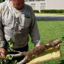 bee removal miami fl